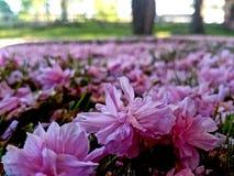Efter blomningen Arkivfoton
