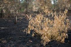 Efter brännskada Royaltyfri Fotografi