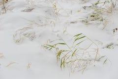 Efter den första snön som ner faller Royaltyfri Foto