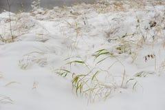 Efter den första snön som ner faller Royaltyfri Fotografi