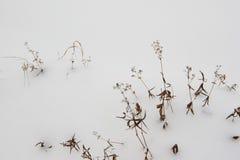 Efter den första snön som ner faller Royaltyfria Bilder