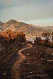 Efter en vegetationbrand i Montenegro arkivfoton