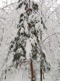 Efter ett enormt tungt snöfall royaltyfria foton