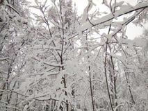 Efter ett enormt tungt snöfall royaltyfri fotografi