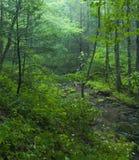 Efter ett regn Greenbrier, TN Arkivbild