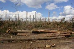 Efter orkan Arkivbilder