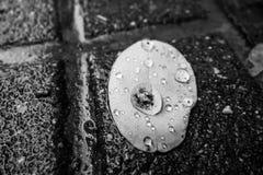 Efter regnet arkivfoton