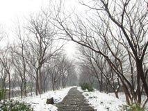 Efter snowen Arkivbild