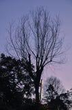 Efter solnedgång Arkivbilder