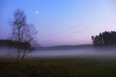 Efter solnedgång Förkylning med den mist täckte ängen, precis trädmaxima ökade från dimma Arkivbild