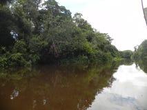 Eftermiddag i den amazon skogen royaltyfri bild