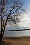 Eftermiddag sjön parkerar med ett träd Royaltyfri Bild