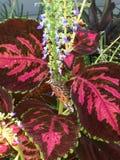 eftermiddagfjärilen blommar den naturliga grässlätten sent Royaltyfri Foto