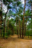 eftermiddagskogsommar Arkivfoto