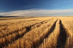 Eftermiddagsolljus på en guld- äng i Colorado Arkivfoton