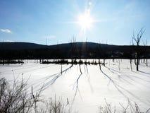 Eftermiddagsolsken i våtmarker på den Schug slingan arkivfoto