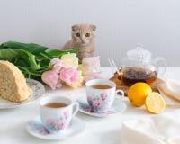 Eftermiddagte med katten Kopp te, citron, tekanna, kaka och blommor på bakgrunden royaltyfri fotografi