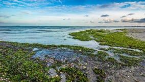 Eftermiddagtimelapse på kusten av stranden med gröna alger arkivfilmer