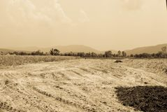 Efterrätt av fält Arkivfoton