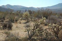 Efterrätt nära Las Vegas, Nevada! Arkivbild