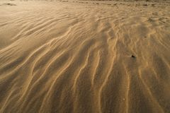 Efterr?tt som texturerad sand - golfstrand f?r baltiskt hav med vit sand i solnedg?ngen arkivbilder