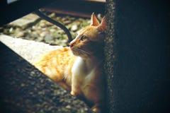 Eftertänksam katt Arkivfoton