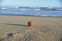 Egagropili, brown piłka mył up przypływami Zdjęcie Stock