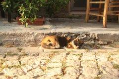 Egeïsch gebied - Tenedos-eiland, het slapen kat stock fotografie