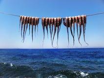 Egeïsche octopussen onder de zon Royalty-vrije Stock Afbeeldingen
