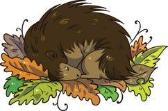 Egel die tijdens de winter in stapel van bladeren hiberneren royalty-vrije illustratie