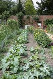 Egetables growing n the walled kitchen garden. UK, Launde Abbey, Leicestershire - July 2018: vegetables growing n the walled kitchen garden stock image