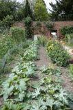 Egetables que cresce n a horta murada imagem de stock