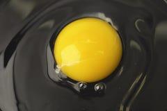 egg żółtko Obrazy Royalty Free