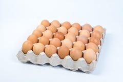 Egg в клети яичка на белой предпосылке Стоковое Изображение RF
