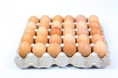 Egg в клети яичка на белой предпосылке Стоковые Фотографии RF