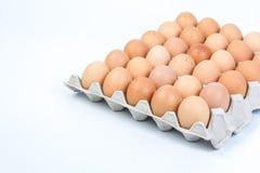 Egg в клети яичка на белой предпосылке Стоковое Фото