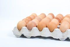 Egg в клети яичка на белой предпосылке Стоковое Изображение