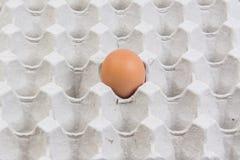 Egg в клети яичка на белой предпосылке Стоковые Изображения RF