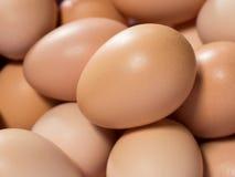 Egg, предпосылка свежих коричневых яичек цыпленка Стоковые Фотографии RF