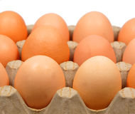 Egg. Macro photo of eggs in carton isolated on white stock images