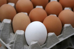 Egg. Poultry farms, egg box, egg white Royalty Free Stock Images