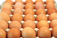 Egg. Chicken egg is in a container Royalty Free Stock Photos