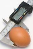 Egg. Single egg under a calibration royalty free stock photos