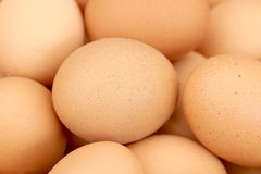 Egg. Micro photo of eggs background Stock Photos