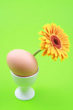 Egg. One egg and yellow gerbera on green background Stock Image
