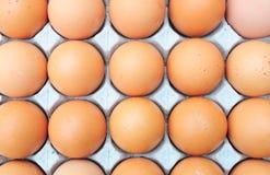 Egg Royalty Free Stock Image