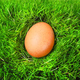 The egg. Stock Photos