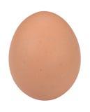 Egg. Fresh brown egg macro closeup Royalty Free Stock Photo