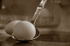 Egg. On a spoon Stock Image