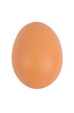 Egg. Brown chicken egg isolated on white background Stock Images